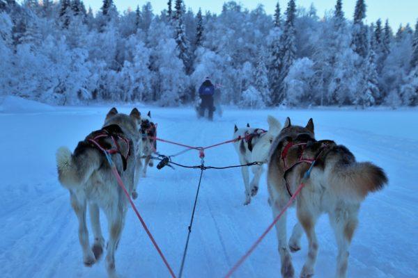 Tips till din resa i Lappland